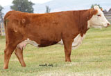 CL 1 Dominette 9140W - Dam of 105Y