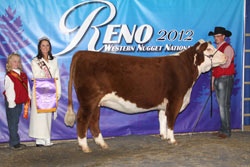 Res. Champion Spring Yearling Female - Click to enlarge