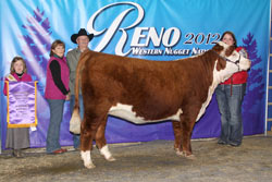 Champion Spring Yearling Female - Click to enlarge