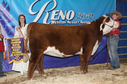 Champion Intermediate Heifer - Jr Show - Click to enlarge