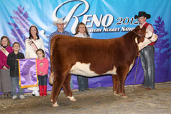 Champion Fall Heifer Calf - Click to enlarge