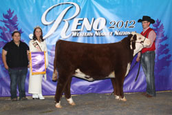 Reserve Champion Junior Heifer Calf - Click to enlarge