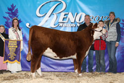 Res. Champion  Junior Heifer Calf - Click to enlarge