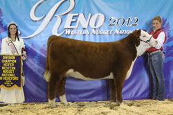 Champion Junior Heifer Calf - Click to enlarge