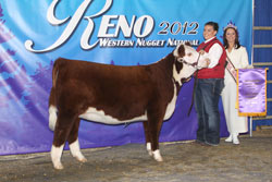 Champion Spring Heifer Calf - Click to enlarge