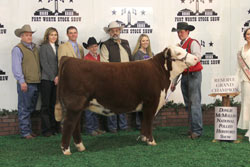 Reserve Grand Champion Polled Female - Click to enlarge