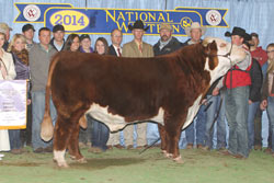 Reserve Grand Champion Bull - Click to enlarge