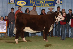 Reserve Grand Champion Horned Female - Click to enlarge