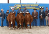 Champion Pen of Three Females - Click to view results